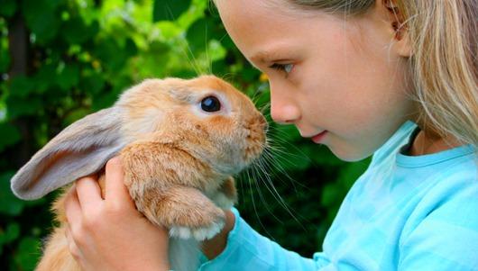 Conejos: ¿Por qué son la mejor mascotas para los niños? | Noticias  Barquisimeto