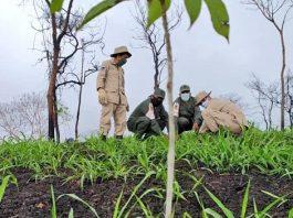 Reforestacion Terepaima