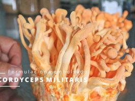 Mycolyco con setas